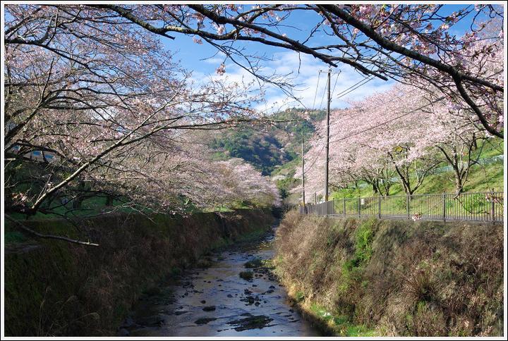 2016年4月2日 山中渓の桜 (4)
