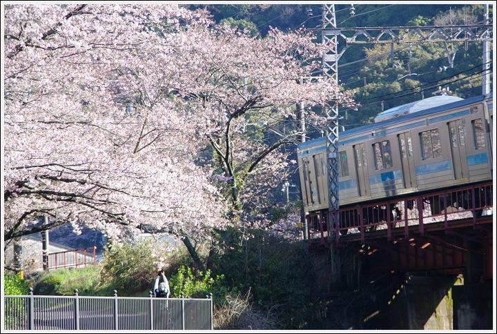 2016年4月2日 山中渓の桜 (5)