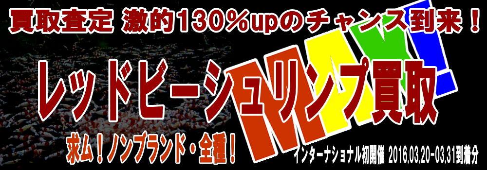 kaitori0331.jpg