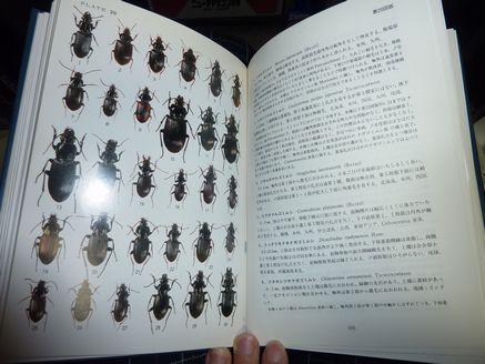 原色甲虫図鑑-2