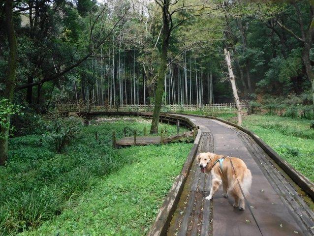 2016-4-4東高根森林公園 桜 009