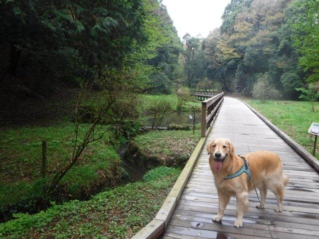 2016-4-4東高根森林公園 桜 010