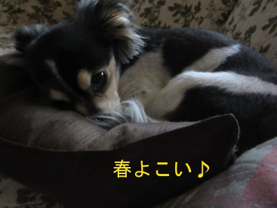 IMG_5269sd.jpg