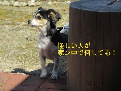 IMG_5309sd.jpg