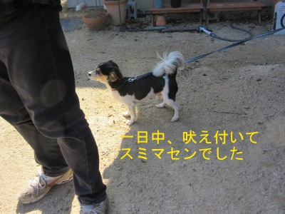 IMG_5331sd.jpg