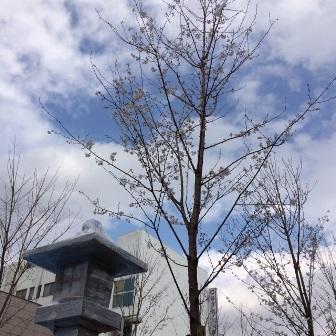 0321桜