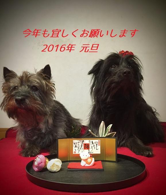 2016kenmaco年賀2