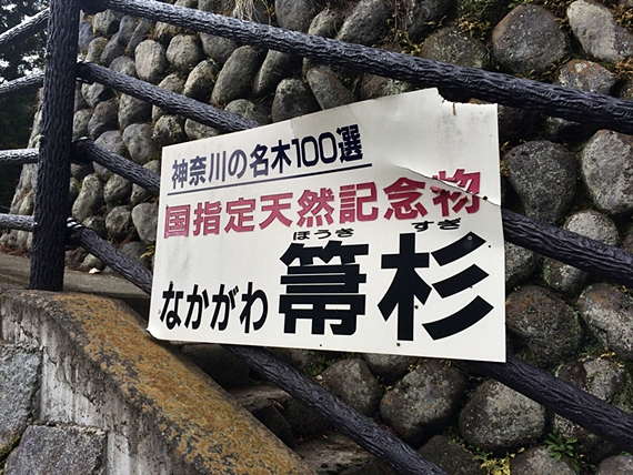 tanzawa-20160320-15s.jpg