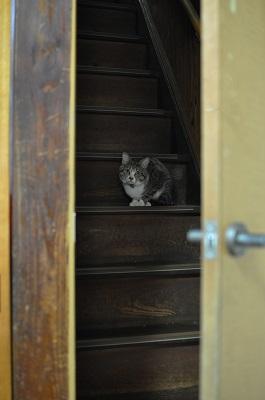 マボロシの猫