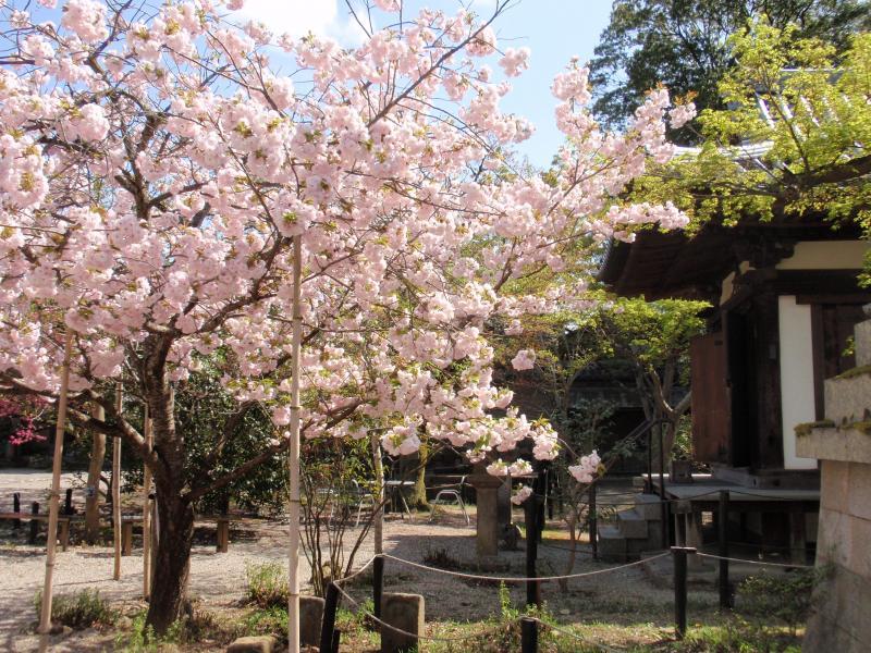 新薬師寺11