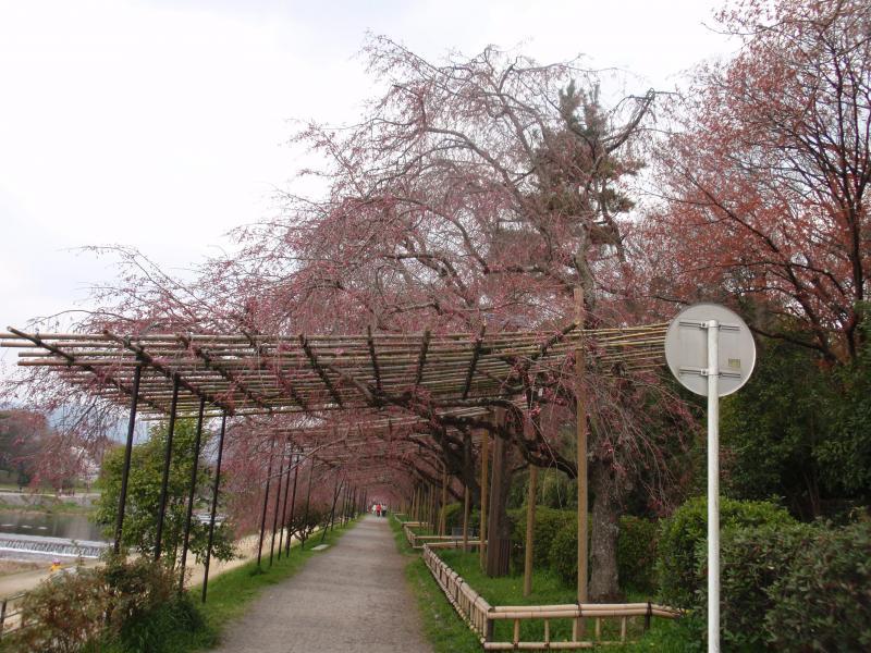 賀茂川堤5