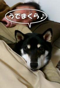 160110_maku.jpg