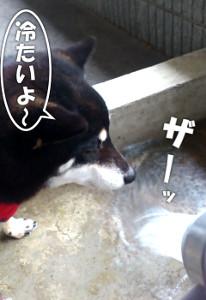 160224_tsumetai.jpg