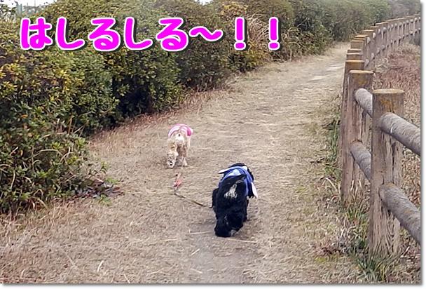 走る走る!