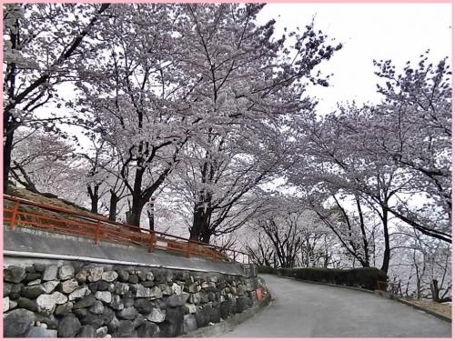 神宮への道沿い