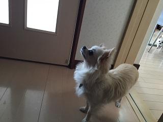 20160403めぐちゃん