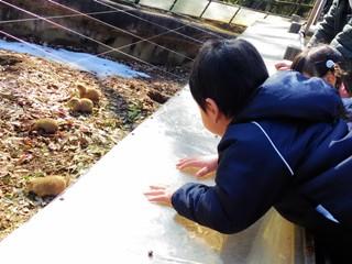 ブログ2 0201動物園 (2)
