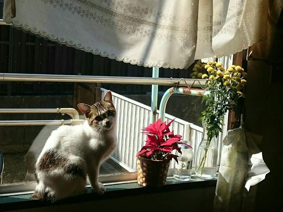 窓辺のたんぽぽ