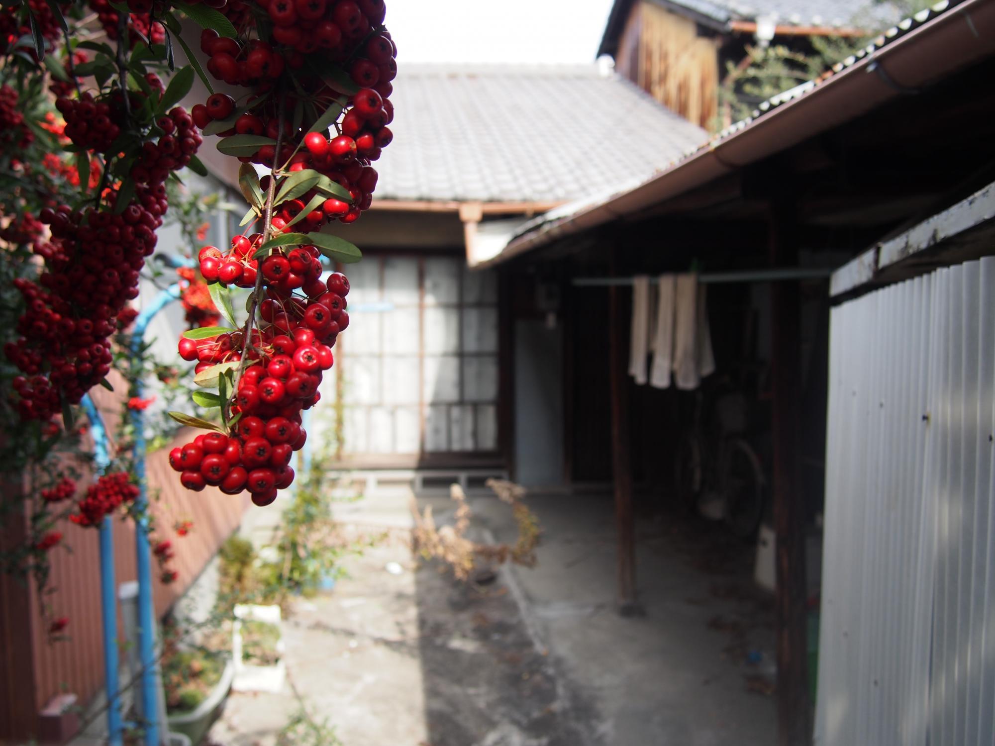赤い実やわい陽
