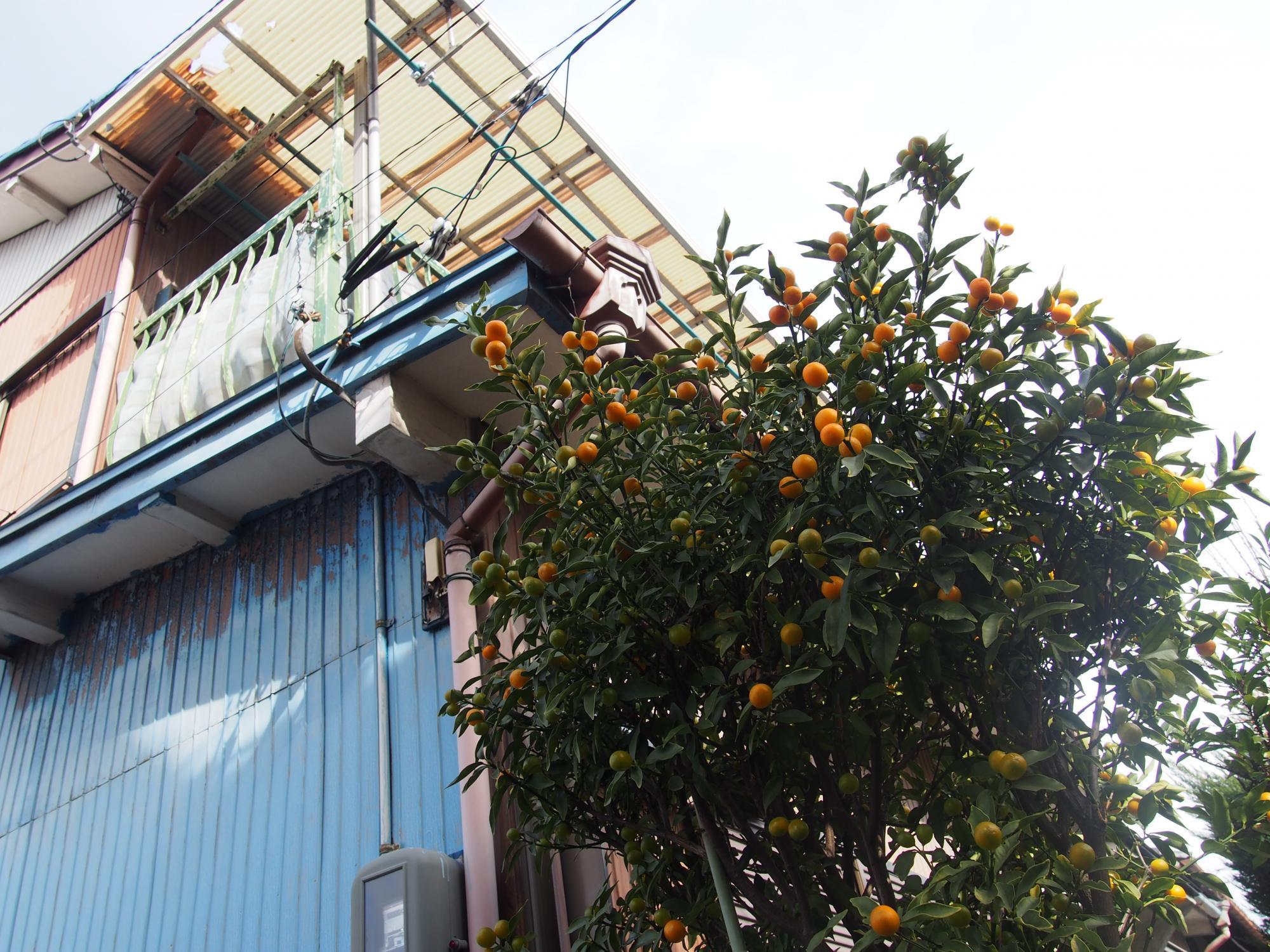水色ベランダとオレンジの木