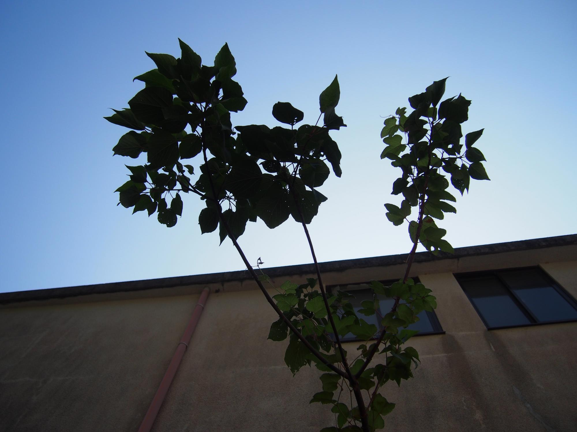 空に細い木