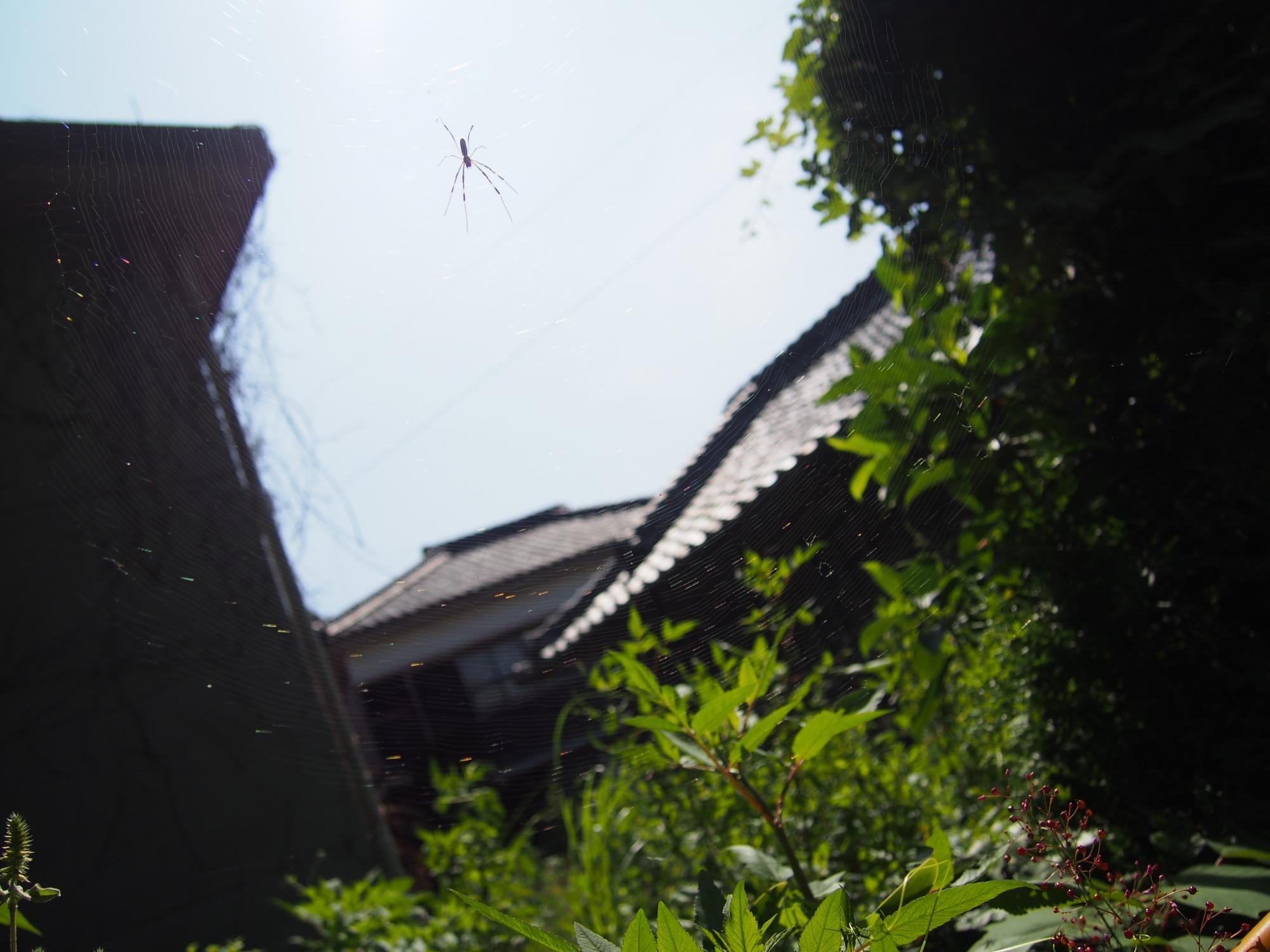 太陽と蜘蛛