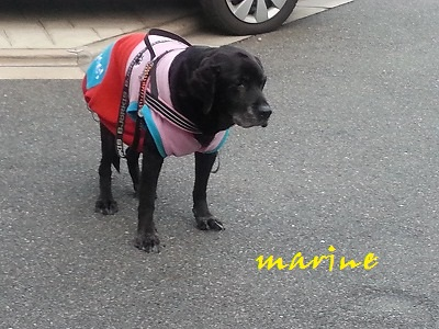 marine120150219.jpg