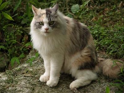 三毛猫マロン姫