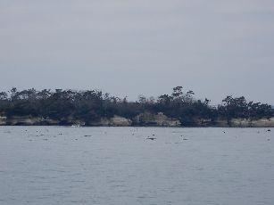 松島遊覧船 (9)