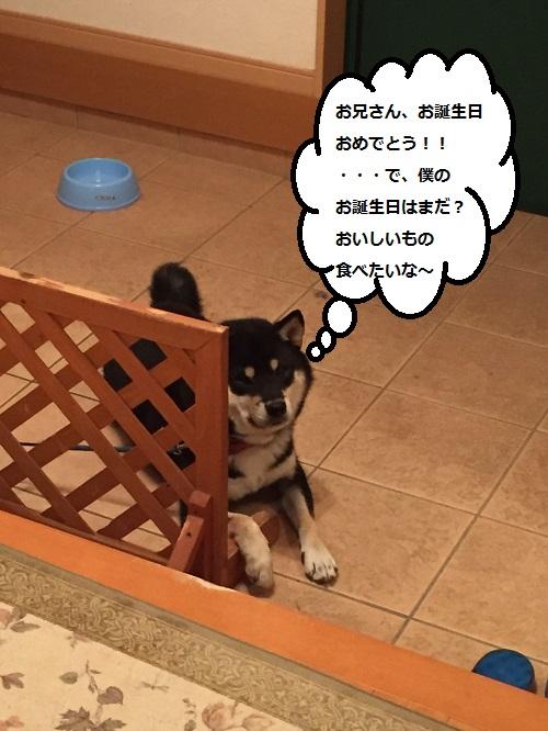 まるちゃん20160325005