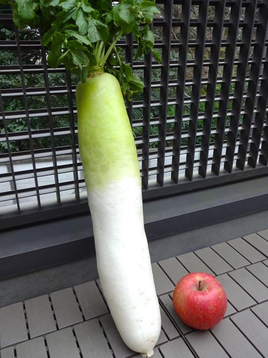 青首大根とりんご