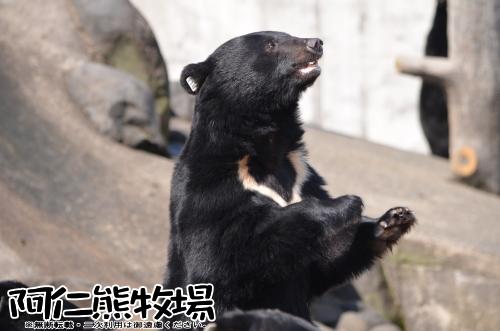 阿仁熊牧場 熊
