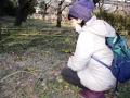 福寿草と妊婦さん