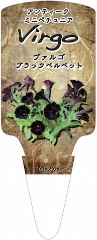 ペチュニア ヴァルゴ ブラックベルベット  オリジナル品種 育種 生産 販売 松原園芸