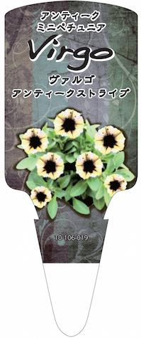 ペチュニア ヴァルゴ アンティークストライプ  オリジナル品種 育種 生産 販売 松原園芸
