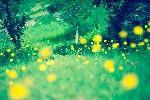森と黄色い花
