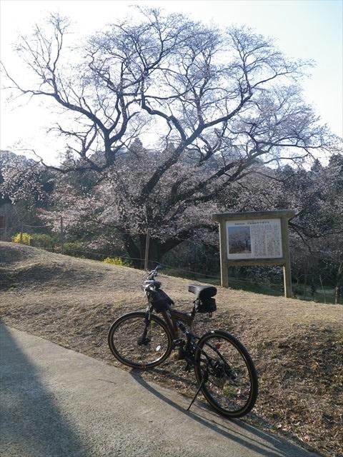 千女房の山桜-1