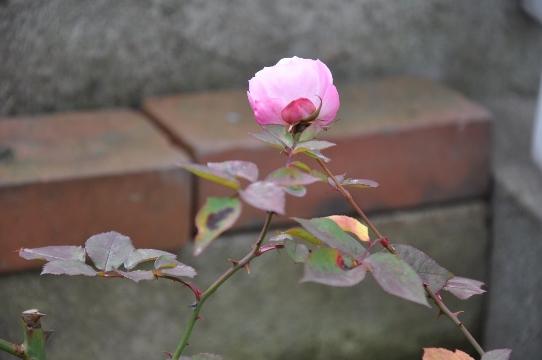 DSC_0036 (542x360)