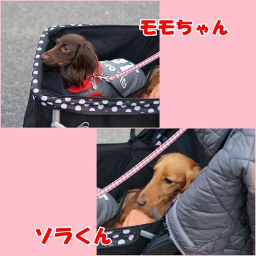 1604_20151216214505bdd.jpg