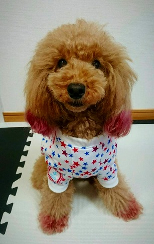 M*mania★マリンスターTシャツ ココアちゃん