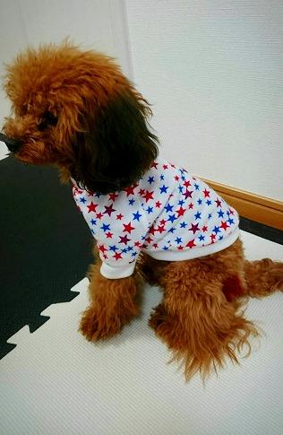 M*mania★マリンスターTシャツ ラピスくん*