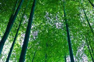 心が洗われる森林