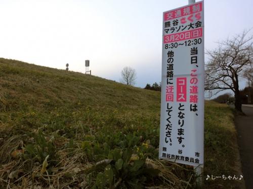 さくらマラソン2016_01