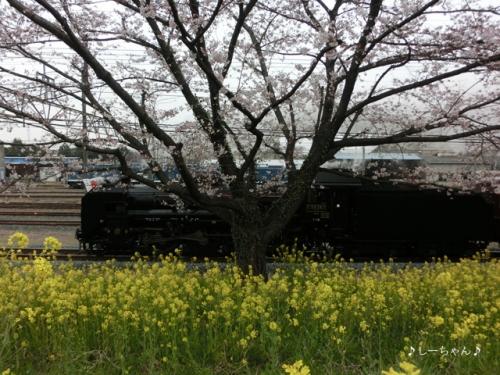 荒川土手の桜・2016_03