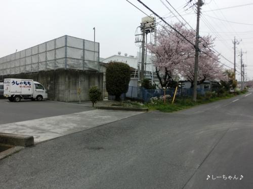 荒川土手の桜・2016_04