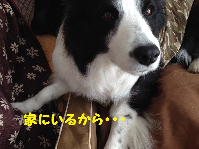 IMG_5829_20160326145451dca.jpg