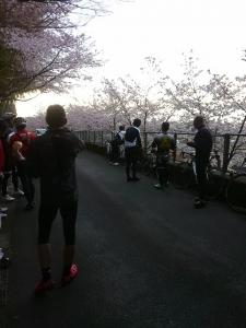 sakura climb1