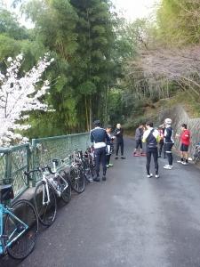 sakura climb3