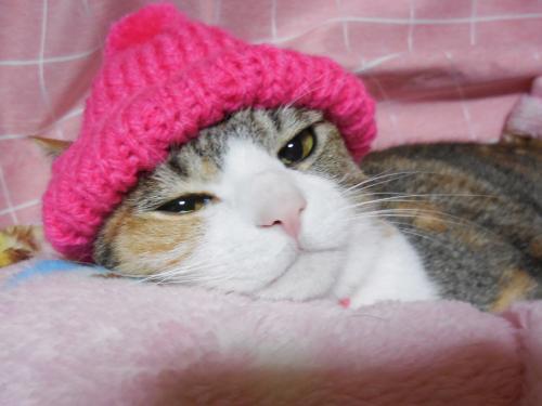 みくピンク帽