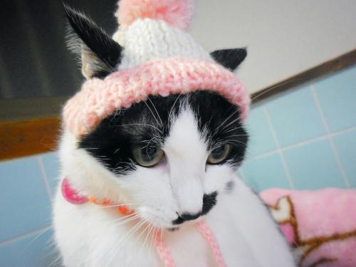 くぅ耳だし帽